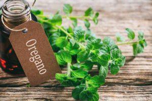 Oregano-Öl in der Kosmetik – kennen Sie alle seine Eigenschaften?
